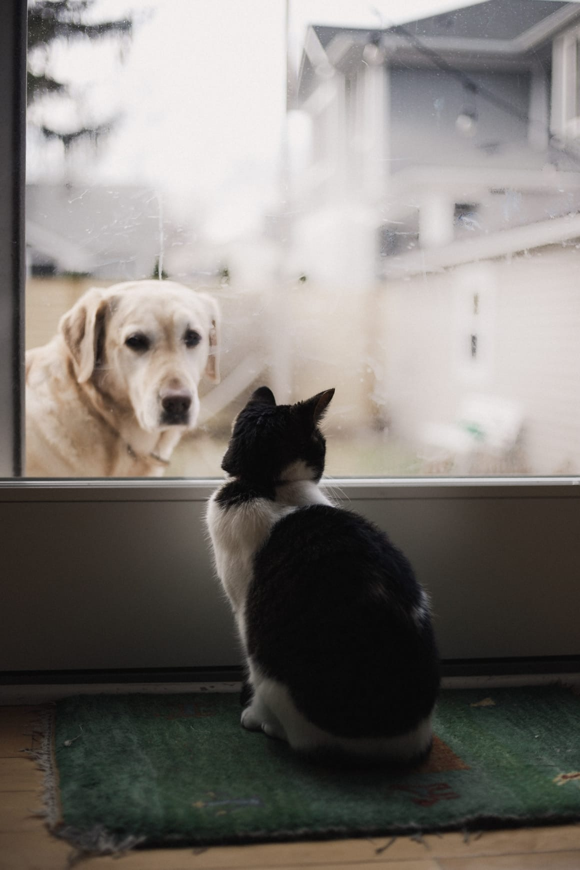 Dog looking out at the cat through a glass door