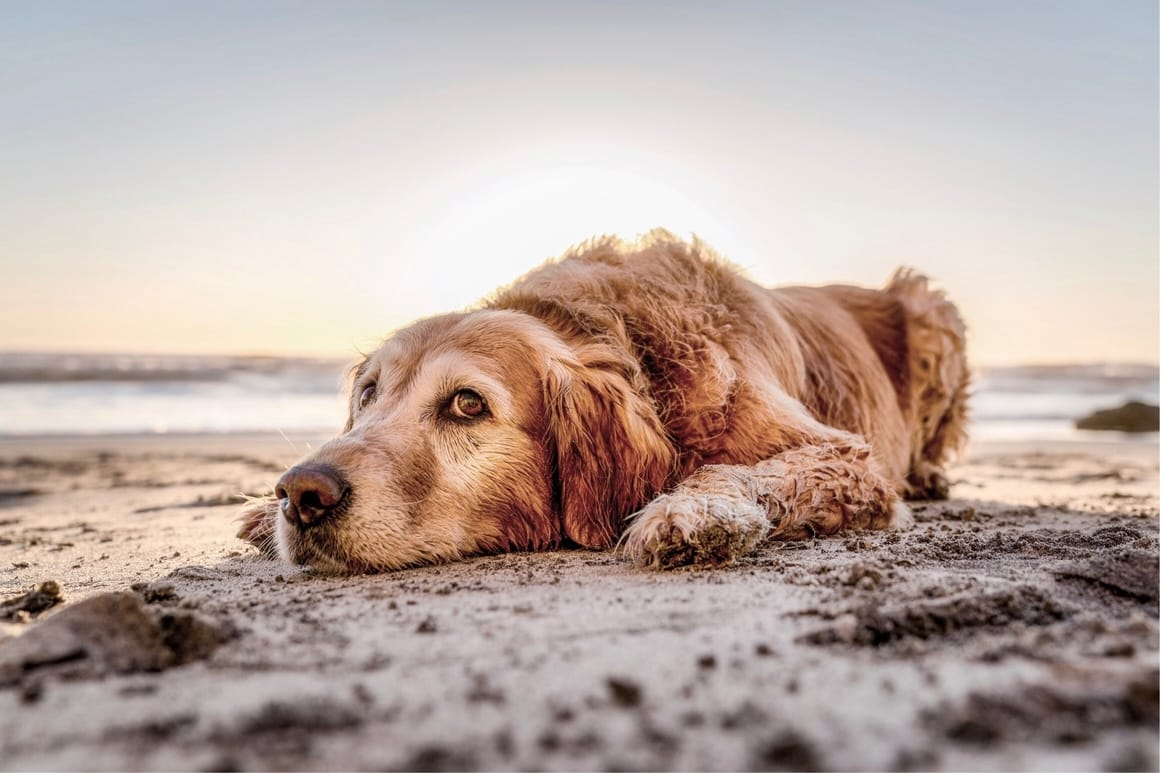 dog laying down on the beach