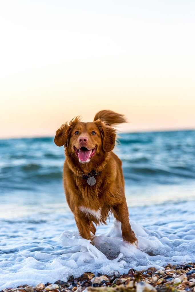 dog running in the sea on the beach